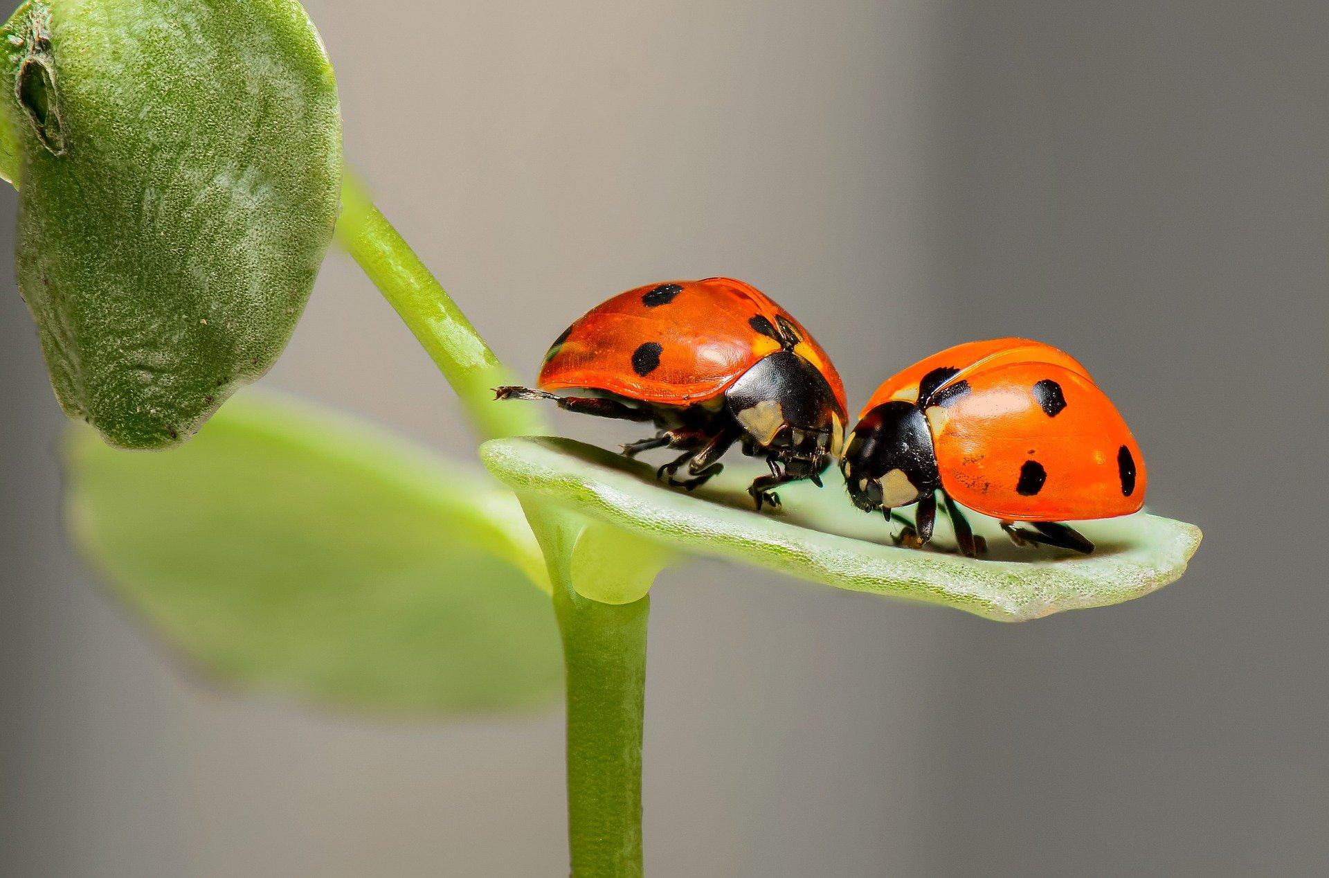 el declive de los insectos