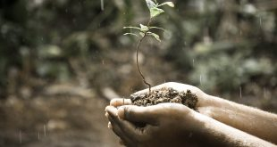 descontaminacion suelo