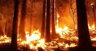 incendios forestales y cambio climático