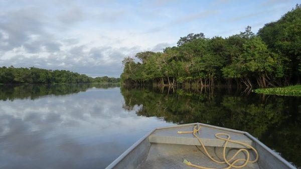 cambio climático y amazonas