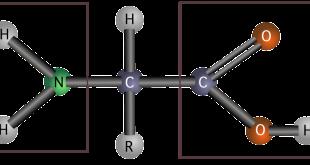 estructura aminoácidos