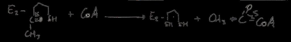 formación acetil CoA