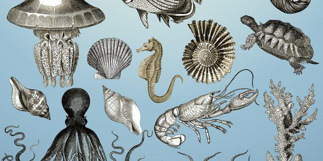 descubre un evento clave para la evolución de la diversidad marina