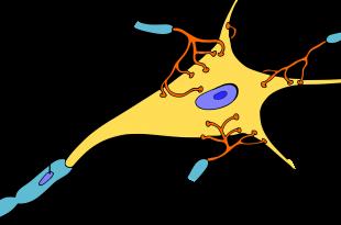celulas de schwann mielina
