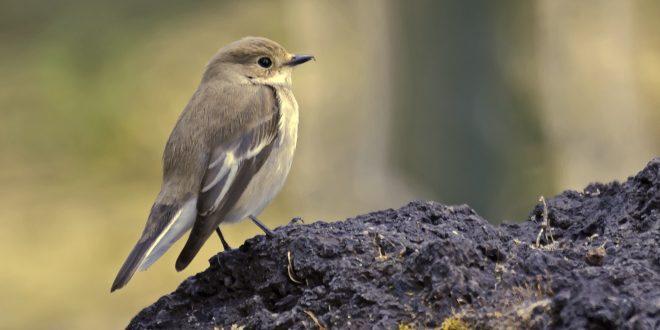 cambio climatico aves