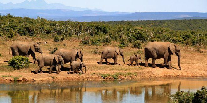 co2 y elefantes del bosque