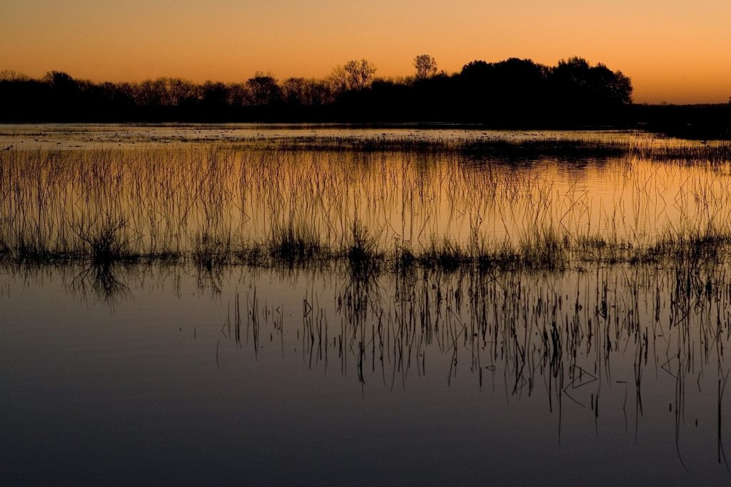 ecosistemas acuáticos aguas subterraneas