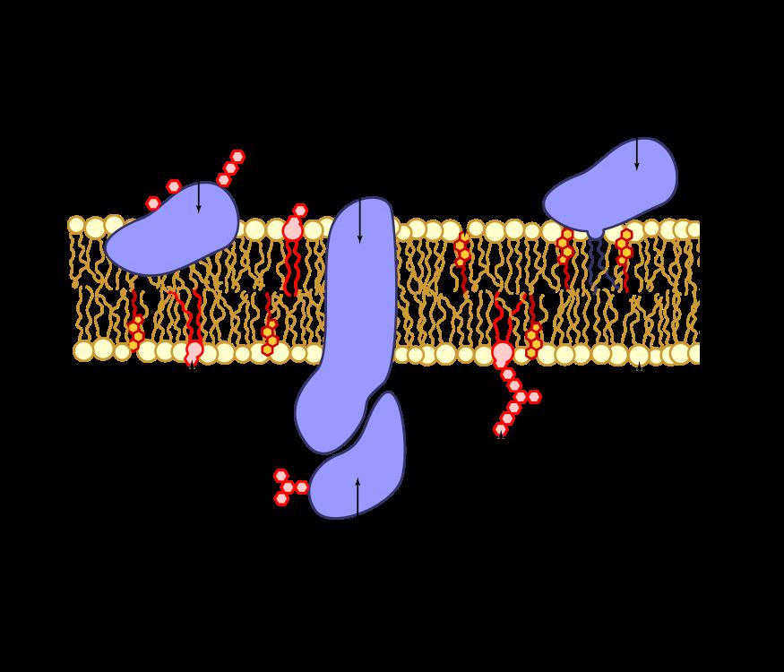 proteínas presentes en la membrana celular
