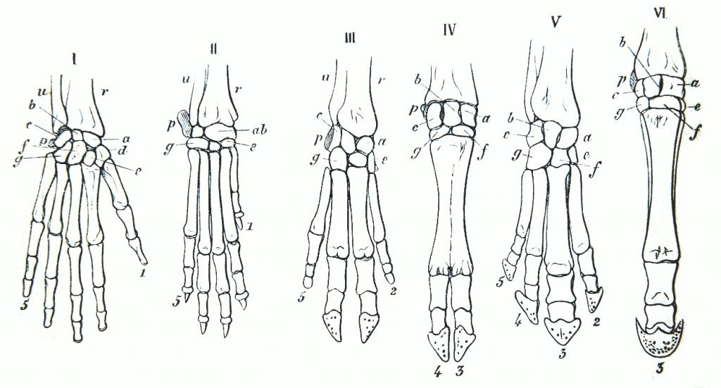 homología de la mano