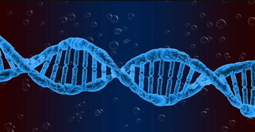 El adn se amplifica para el test de pcr