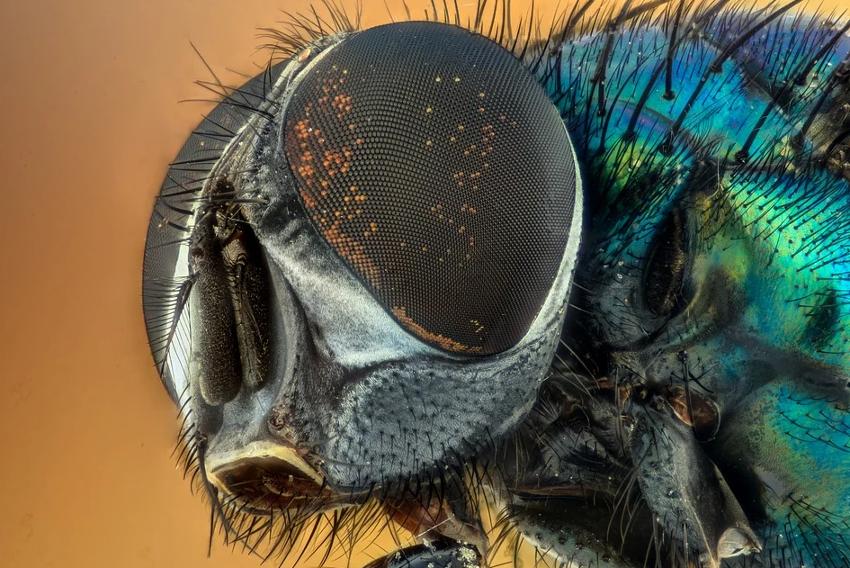 insectos clasificación y características generales