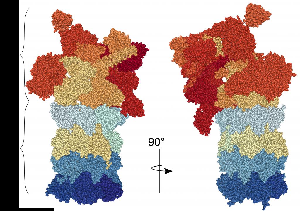 estructura de la partícula regulatoria 19S del proteosoma