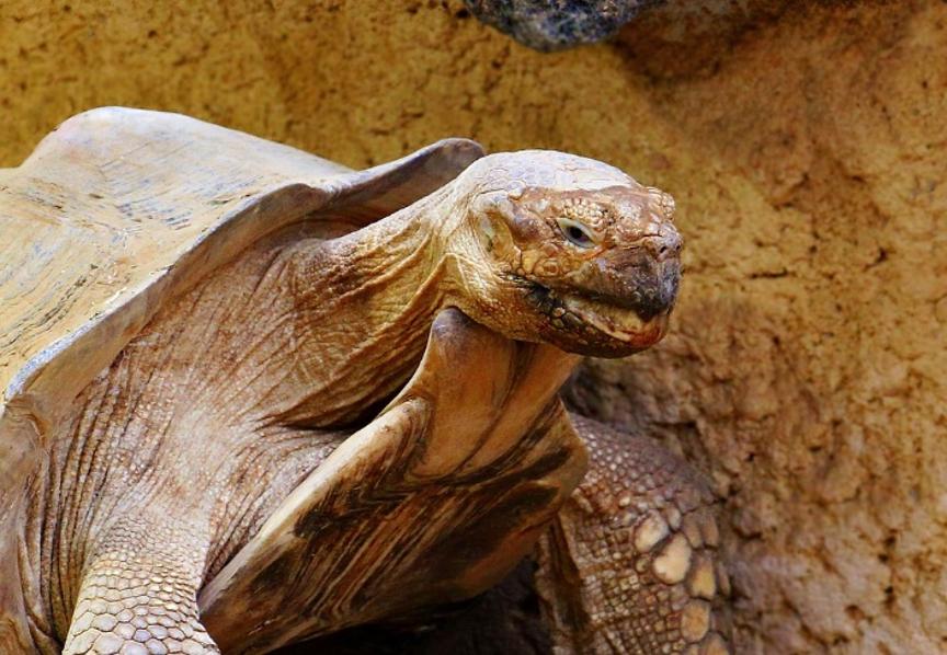 reptiles más longevos
