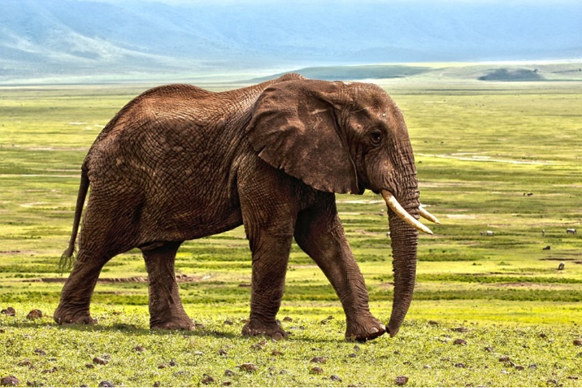 mamífero terrestre longevo