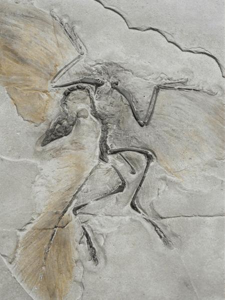 aves y dinosaurios, parentesco