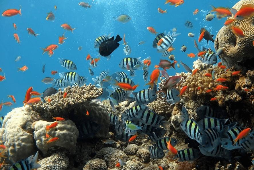 arrecifes de coral dia de la tierra